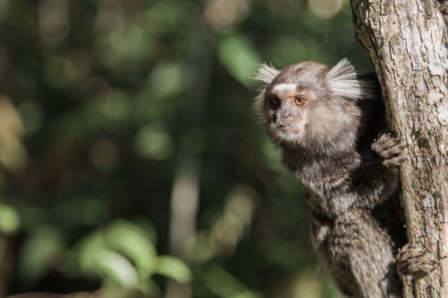 トレッキングの途中猿に出会いました