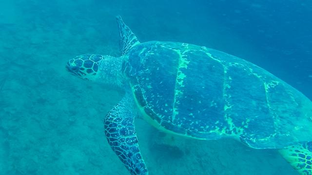 ダイビング中遭遇したウミガメ