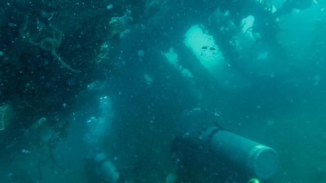 沈没船でのダイビング