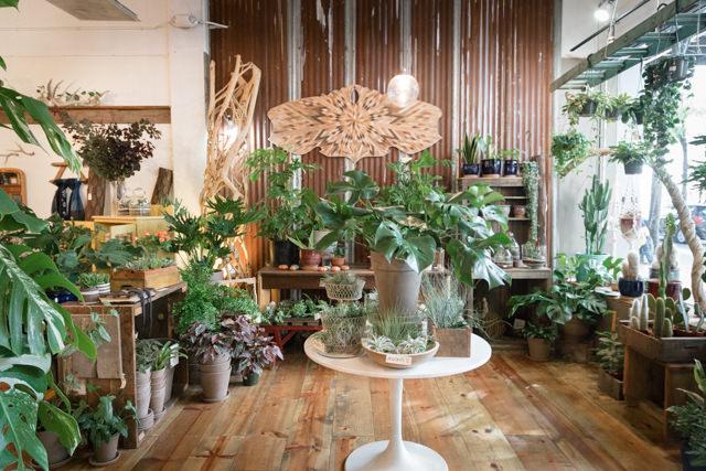 植物を飾るのもセンスが良いお店が多い