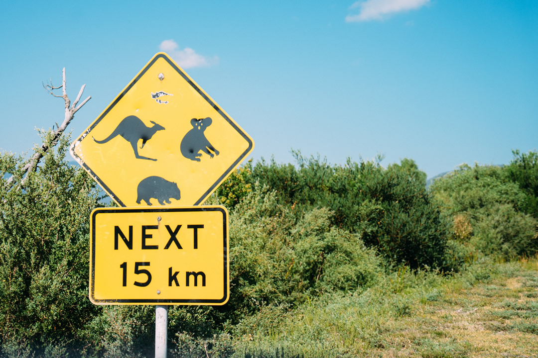 動物注意の看板